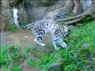 MTB0J3veA7cHv7RtDeF bACXxld934js1OEKFxXQBsw Large Cat Messes With the Wrong Rock
