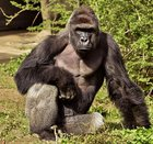 pWByQUVqp oSOBg Rj06PPTo6qB9i CMhrwQ6ISjBYI Harambe was born 18 years ago today, lets get him to the front page for his birthday