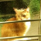 AGUJNhoKk7jMmqDANaW9 VaNhT0UR6L04SKu5zC4TpE This cat looks pretty cool through the glass of one of our windows like some sorta painting