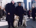 wB LuzdztFEA lPC5xtAck V6shQADtLdeAwEhoRFWQ TIL One of the unsung heroes of 9/11 was a guide dog, Roselle, a yellow Labrador who led her blind owner, Michael Hingson, down 78 storeys of the North Tower and to the home of a friend.