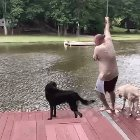 5rYoQor fPD1wH7dVB0RILzeO7f3OZESRcf 3IvTH9g Dogs panic, rescue owner thats definitely going to drown.